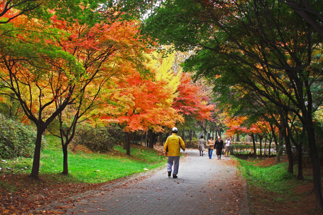 3-2. 양재시민의숲_북측 구역 테니스장 인근 산책로에 단풍이 한창이다.(11월 풍경).jpg